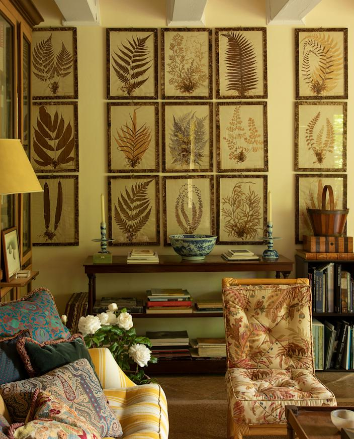 """<div class=""""caption""""> A collection of framed 19th-century dried ferns in the summer room of the guesthouse. </div> <cite class=""""credit"""">Guido Taroni </cite>"""