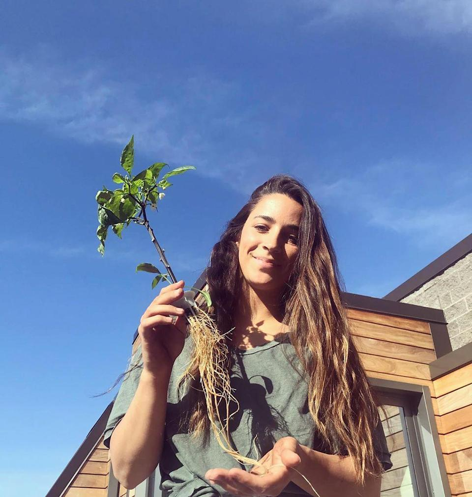"""<p>Look at those roots! The Olympic gymnast was <a href=""""https://www.instagram.com/p/CATFaUZHGNO/"""" rel=""""nofollow noopener"""" target=""""_blank"""" data-ylk=""""slk:flexing her gardening skills"""" class=""""link rapid-noclick-resp"""">flexing her gardening skills</a> far before the coronavirus pandemic began, but now she's finding more time to work that green thumb.</p> <p>In this photo, the gold medalist can be seen transplanting a jalapeño outside after growing it from the seed inside. </p> <p>""""If you look closely you can see a few flowers,"""" she wrote. """"After a flower grows a jalapeño comes next. So I will get a lot of jalapeños because more flowers will continue to grow 🌺🌞🌿🌾🌼""""</p>"""