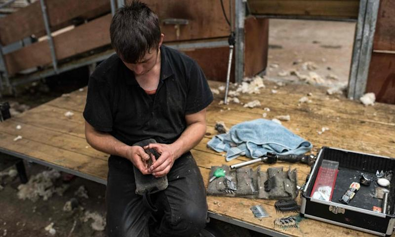 A professional shearer cleans and inspects the tools of his trade.