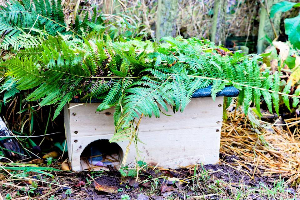 The hedgehog house in the garden. (Dumfries House)