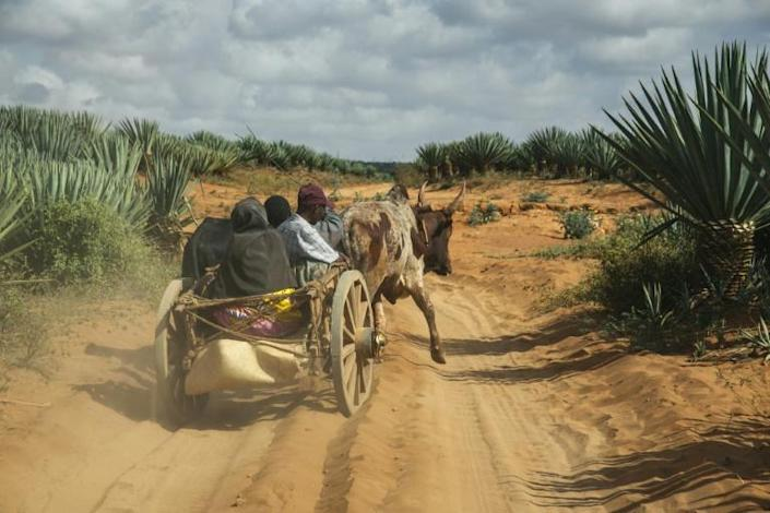 Across Madagascar's vast southern tip, drought has transformed fields into dust bowls. More than one million people face famine (AFP/RIJASOLO)