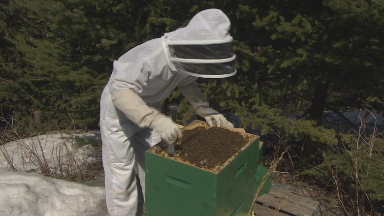 Want to keep N.L. bees healthy? Stop imports, says beekeepers group