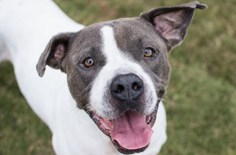 "Mr. Big, described as having a ""bright and shining personality"" despite being treated cruelly by previous owners, is one of 20 shelter dogs in the Atlanta area participating in ""Home for the Pawlidays."""