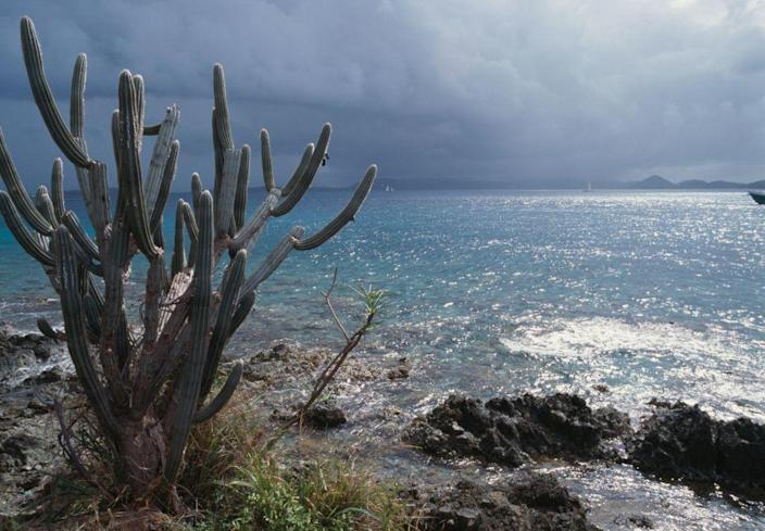 <p>A cactus along the sea at Turtle Bay in Virgin Islands National Park, U.S. Virgin Islands. // March 05, 2018</p>