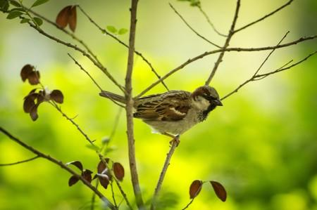 FILE PHOTO: A sparrow perches in a tree in New York's Central Park