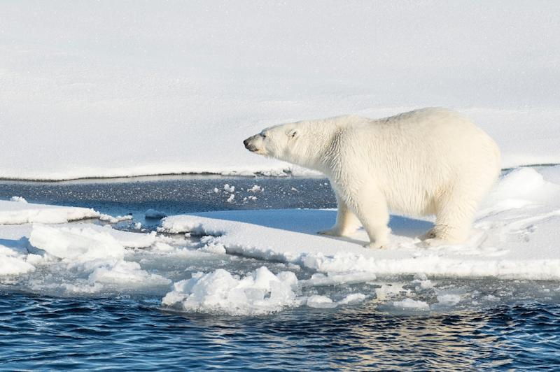 Global temperatures are changing at a far faster pace than ever before, dramatically affecting the Arctic ice cap (AFP Photo/Cory J. Mendenhall)