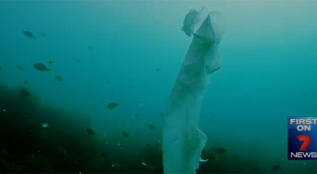 A marine biologist says 'we shouldn't be emptying our toilets into the ocean'. Photo: 7 News