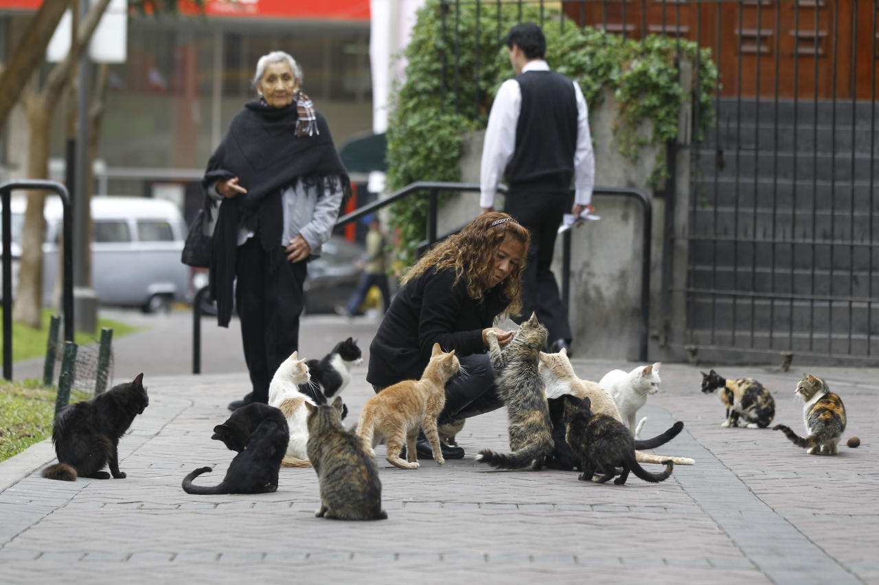 Lita Velasquez feeds cats in the central park of Lima's upscale seaside Miraflores district, in Peru, Wednesday, Aug. 2, 2012. (AP Photo/Martin Mejia)