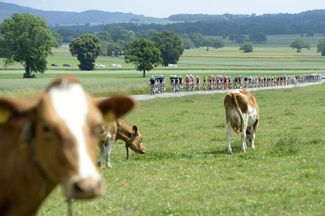 The pack cycles during the 6th stage, a 192.8 km race, from Bueren an der Aare to Delemont, at the 78th Tour de Suisse UCI ProTour cycling race, in Chaumont, Switzerland, Thursday, June 19, 2014. (AP Photo/Keystone,Jean-Christophe Bott)