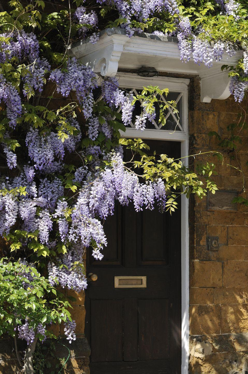 <p>Train wisteria to grow over the front door, liven up a bare wall with bougainvillea, or let clematis climb up a mailbox. A simple stake in the dirt is all the trellis you'll need.</p>