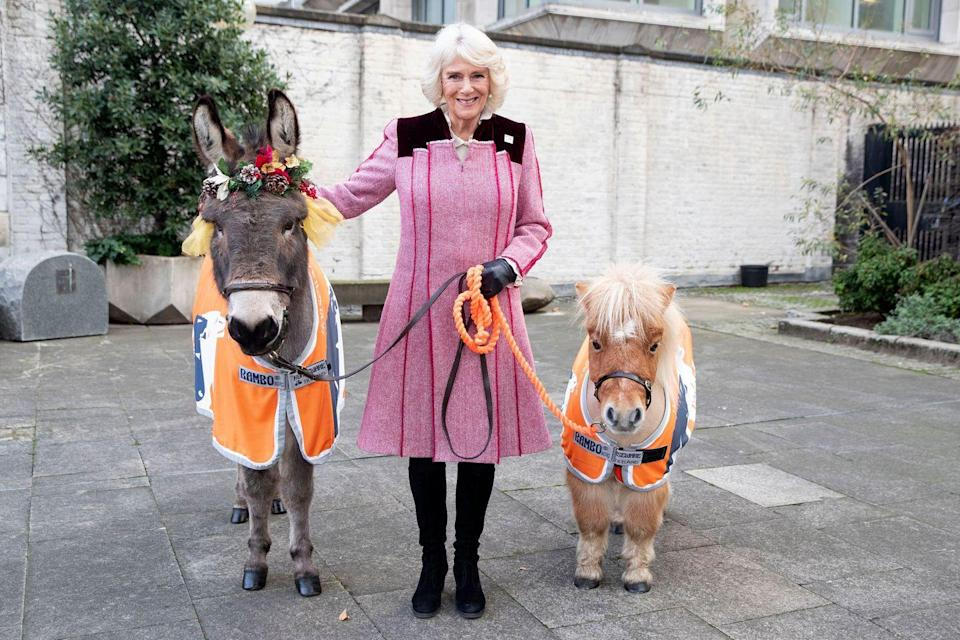 <p>Camilla wore a pink coat dress with red velvet details and black boots as she posed with a donkey and mini Shetland pony at an animal welfare charity event at the Guard's Chapel. </p>