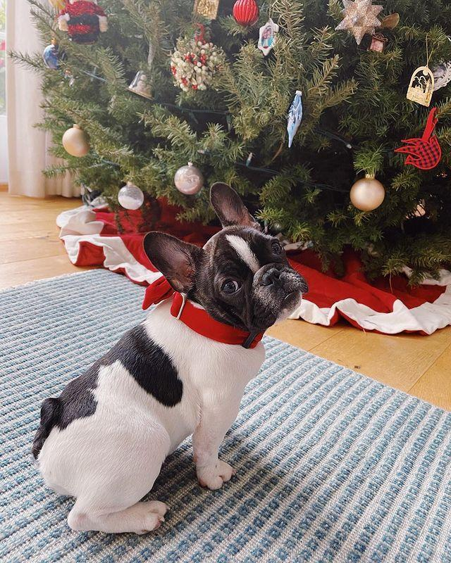 "<p>The proud 'stagemum' shared a photograph of her adorable pup in front of her gigantic Christmas tree wearing a red collar. 'Over the shoulder is her best pose,' joked the actress in the post's sweet caption. </p><p><a href=""https://www.instagram.com/p/CIyRzadg7Pd/?utm_source=ig_web_copy_link"" rel=""nofollow noopener"" target=""_blank"" data-ylk=""slk:See the original post on Instagram"" class=""link rapid-noclick-resp"">See the original post on Instagram</a></p>"