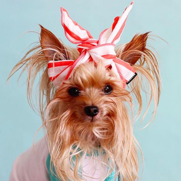 <p>We wish we could rock a headscarf or beanie as well as this messy chic pup does.<br /></p>