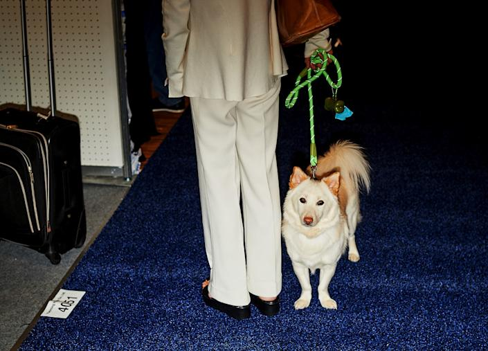 """A conference attendee arrives with her Shiba Inu at the Global Pet Expo. <span class=""""copyright"""">(Zack Wittman / For The Times)</span>"""