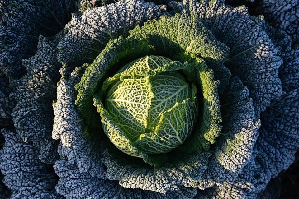Scientists say that brassica vegetables contain a compound called S-methyl-ʟ-cysteine sulfoxide that produces potent, sulphurous odours when acted upon by an enzyme in the plant (Joe Giddens/PA) (PA Archive)