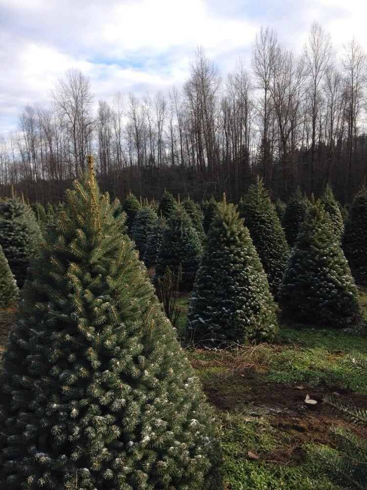 "<p><strong><a href=""https://www.yelp.com/biz/coates-christmas-trees-farm-auburn"" rel=""nofollow noopener"" target=""_blank"" data-ylk=""slk:Coates Christmas Tree Farm"" class=""link rapid-noclick-resp"">Coates Christmas Tree Farm</a> in Auburn</strong></p><p>""What a cool Xmas tree farm! We were here for family holiday pictures, they let photographers come do their thing which I thought was cool. So honestly I only experienced walking around the tree farm and didn't make any purchases."" - Yelp user <a href=""https://www.yelp.com/user_details?userid=-E4Smvof6DdBHCnZNyxNMw"" rel=""nofollow noopener"" target=""_blank"" data-ylk=""slk:Justin H."" class=""link rapid-noclick-resp"">Justin H.</a></p><p>Photo: Yelp/<a href=""https://www.yelp.com/user_details?userid=l6fQbPnR7_PigOPkbw8gIA"" rel=""nofollow noopener"" target=""_blank"" data-ylk=""slk:Kelsey S."" class=""link rapid-noclick-resp"">Kelsey S.</a></p>"