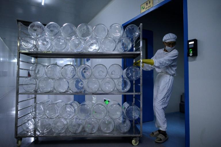 Yisheng Biopharma has converted one of its nine workshops into a COVID-19 vaccine production line (AFP Photo/NOEL CELIS)