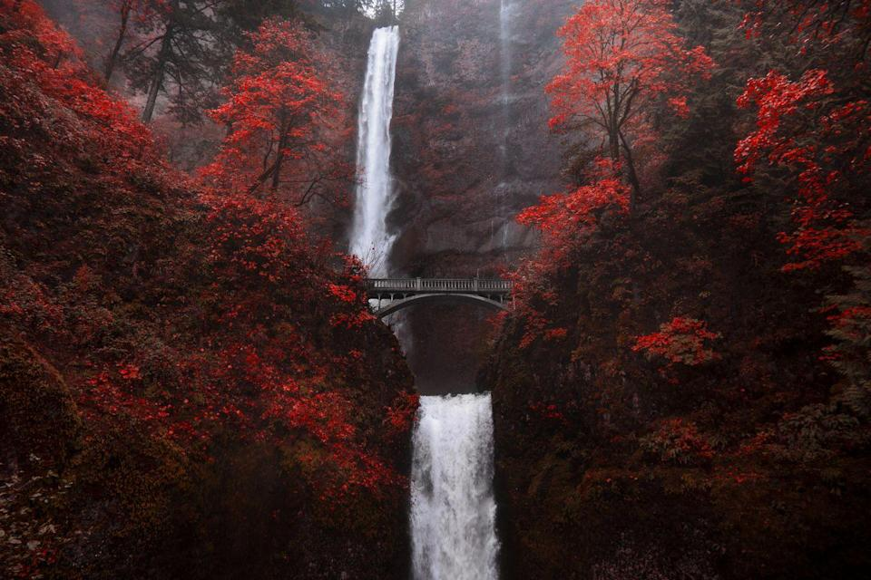 """<p>Multnomah Falls is one of Oregon's most iconic natural wonders, and a beautiful sight to behold at any time of year—but these striking scarlet leaves are making a strong case for a fall visit. </p><p><a class=""""link rapid-noclick-resp"""" href=""""https://go.redirectingat.com?id=74968X1596630&url=https%3A%2F%2Fwww.tripadvisor.com%2FHotels-g51775-Bridal_Veil_Oregon-Hotels.html&sref=https%3A%2F%2Fwww.thepioneerwoman.com%2Fhome-lifestyle%2Fg36804013%2Fbest-places-to-see-fall-foliage%2F"""" rel=""""nofollow noopener"""" target=""""_blank"""" data-ylk=""""slk:FIND A HOTEL"""">FIND A HOTEL</a></p>"""