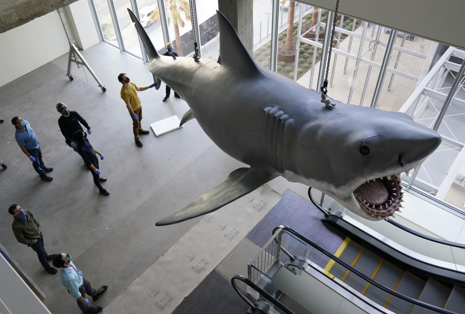 """Museum workers look on as a fiberglass replica of Bruce, the shark featured in Steven Spielberg's classic 1975 film """"Jaws"""" is lifted into a suspended position for display at the new Academy of Museum of Motion Pictures, Friday, Nov. 20, 2020, in Los Angeles. The museum celebrating the art and science of movies is scheduled to open on April 30, 2021. (AP Photo/Chris Pizzello)"""