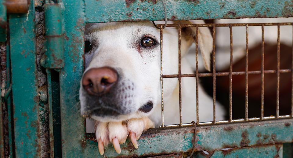 There has been a global outcry after it emerged that a NSW regional council pound put down 15 dogs due to Covid concerns. Source: Getty Images