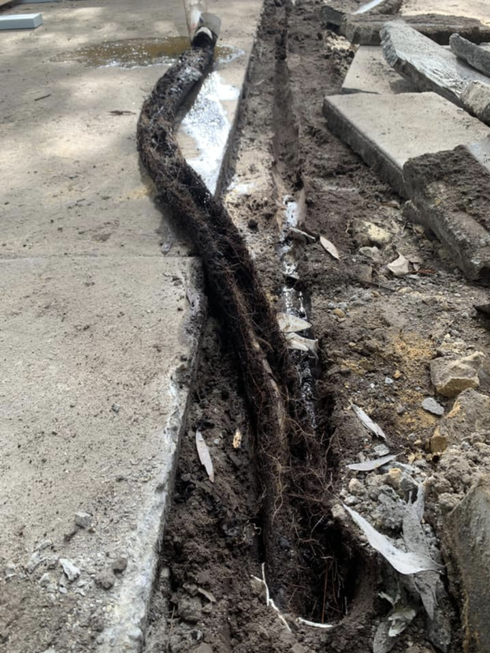 A clump of tree roots that looks like a snake after being pulled from a drain.
