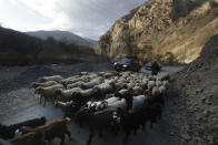 An ethnic Armenian looks at flock of sheep the separatist region of Nagorno-Karabakh, on Friday, Nov. 13, 2020. Under an agreement ending weeks of intense fighting over Nagorno-Karabakh, some Armenian-held territories, such as this area, will pass to Azerbaijan. (AP Photo/Sergei Grits)