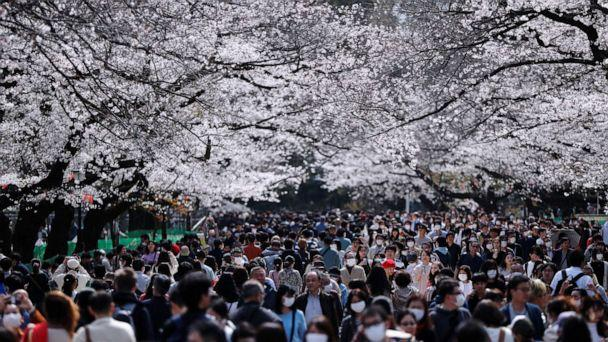 PHOTO: Visitors wearing protective face masks amid an outbreak of the novel coronavirus look at blooming cherry blossoms at Ueno park in Tokyo, Japan, on March 22, 2020. (Issei Kato/Reuters)