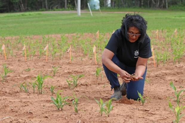 Christine Noronha, a research scientist with Agriculture and Agri-Food Canada in Charlottetown, has been testing this pesticide since 2015.   (Agriculture and Agri-Food Canada  - image credit)