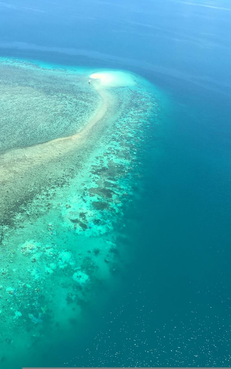 Bleached coral reefs located between Cairns and Papua New Guinea on the Great Barrier Reef - Credit: RY/AFP/Getty Images