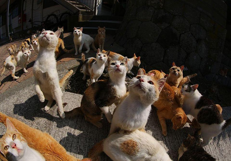 <p>Cats outnumber humans six to one in Ehime, Japan // June 2015</p>