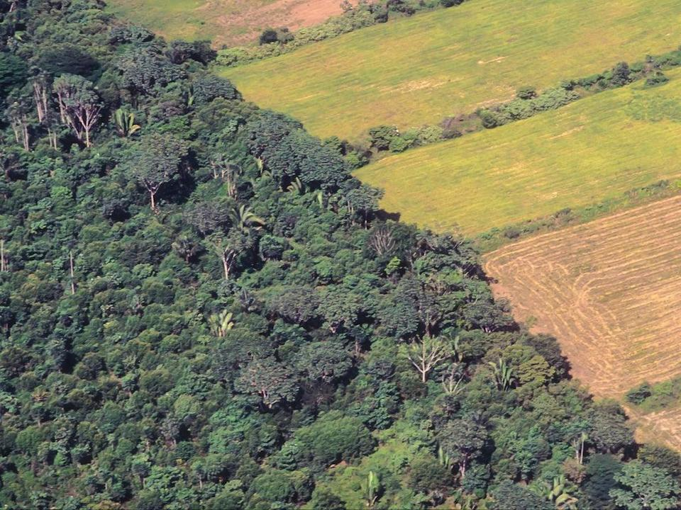 Soya farm field besides the original forest of the Amazon in Brazil (Getty)