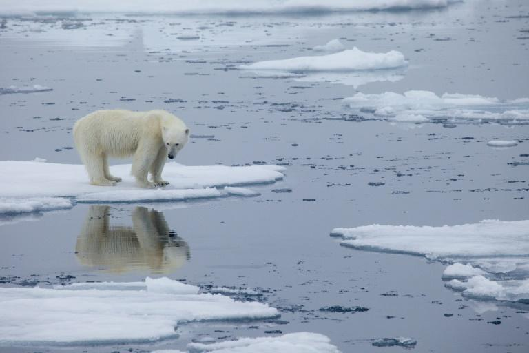 A polar bear stands on melting sea ice in Svalbard, Norway, in 2013