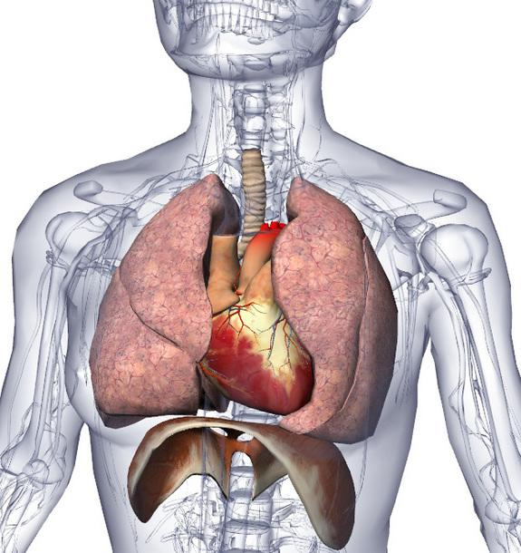 Lung Transplants Controversial for Cystic Fibrosis Patients