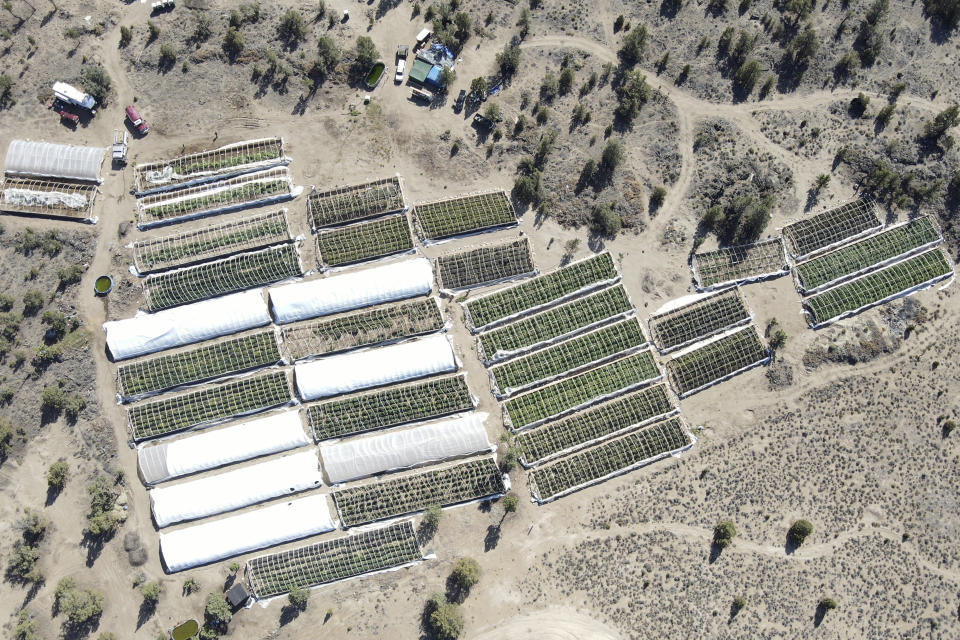 A marijuana grow is seen on Sept. 2, 2021, in an aerial photo taken by the Deschutes County Sheriff's Office the day officers raided the site in the community of Alfalfa, Ore. On the 30-acre property in the high desert they found 49 greenhouses containing almost 10,000 marijuana plants and a complex watering system with several 15,000-20,000 gallon cisterns. (Deschutes County Sheriff Via AP)
