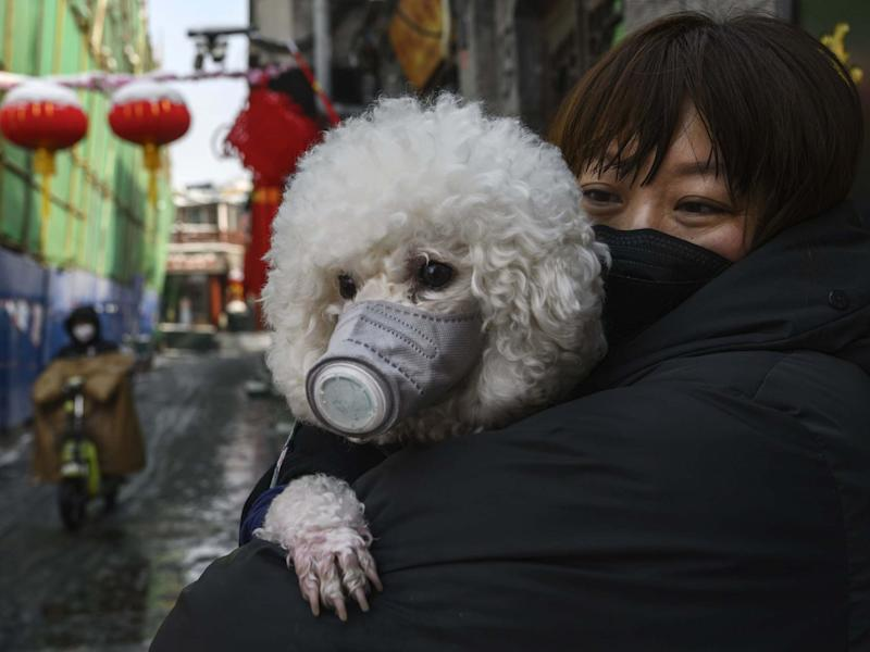 A Chinese woman holds her dog that is wearing a protective mask as well as they stand in the street in Beijing, China: Getty Images