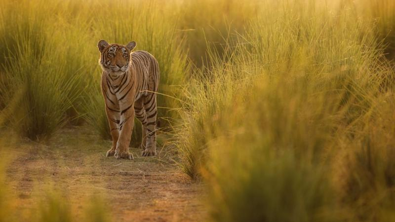 Debate: Can the New Method to Count Tigers Really Remove Errors?
