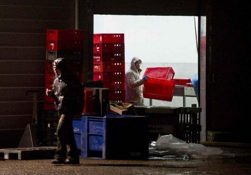 """Employees at meat processing plant Willy Selten in Oss work on February 15, 2013 after Dutch officials raided the factory believed to be mixing horsemeat and beef and selling it on as pure beef. Around 10 countries are so far affected by Europe's spiralling food crisis, in which horsemeat has ended up in millions of ready-to-eat """"beef"""" meals"""