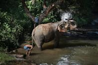 A female elephant bathing with her mahout at the ChangChill elephant sanctuary in the northern Thai province of Chiang Mai, which is working with World Animal Protection to ensure their welfare