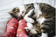 <p>Cats curling up into a little ball at your feet are the absolute definition of comfort. </p>