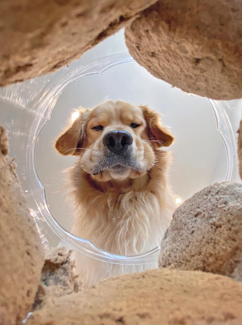 Mars Petcare Comedy Pet Photo Awards (Photo: ©Candice-Sedighan/Mars Petcare Comedy Pet Photo Awards 2020)