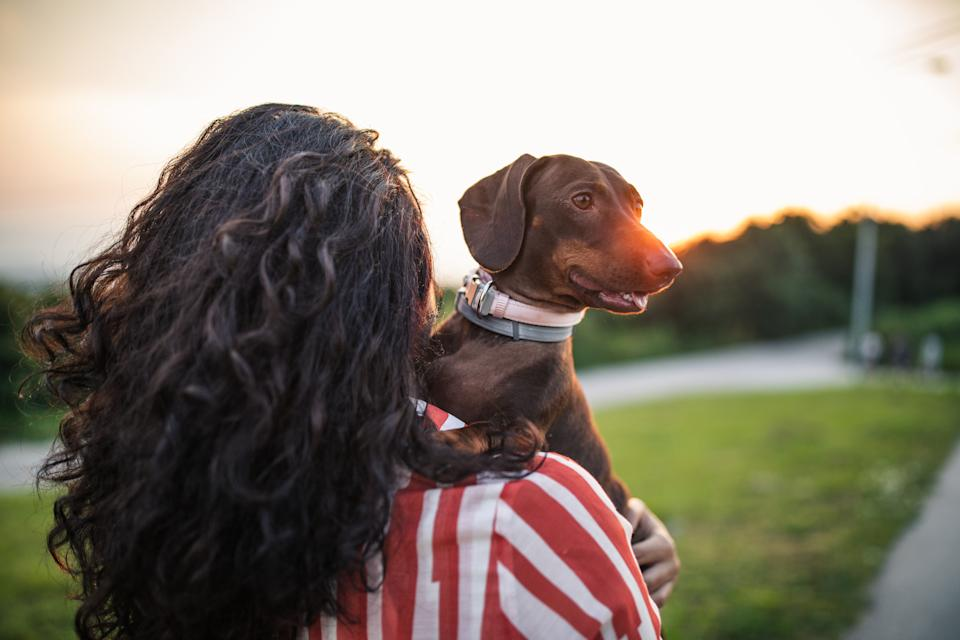 Experts say dog theft is on the rise. (Getty Images)