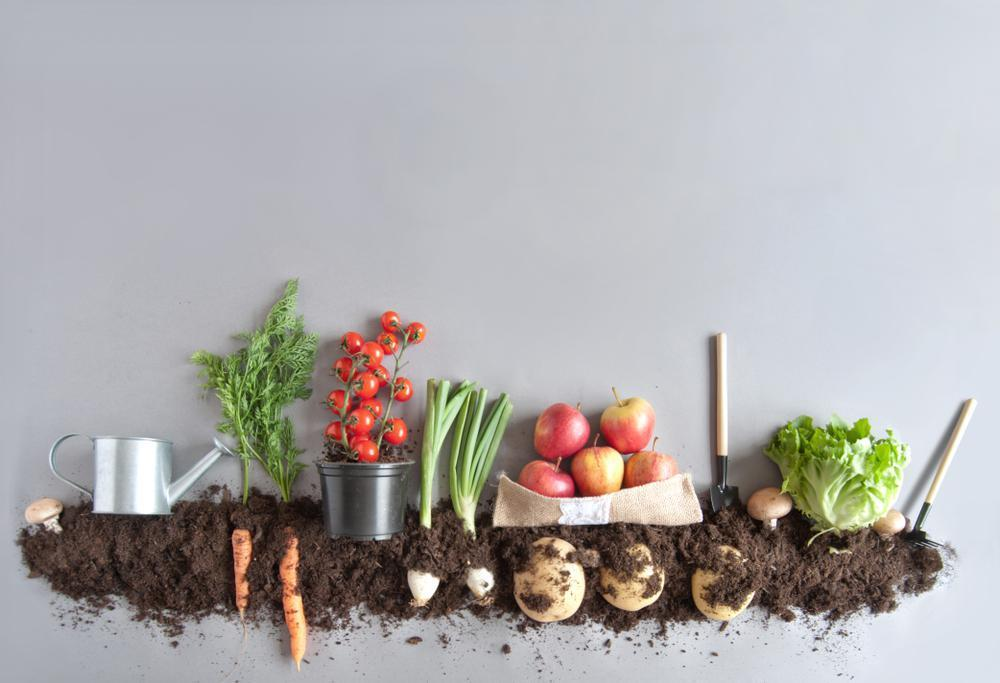 """<p>""""Organic used to mean sustainable,"""" Nestle said. """"But the USDA's <a href=""""https://www.thedailymeal.com/healthy-eating/25-foods-you-should-always-buy-organic-slideshow?referrer=yahoo&category=beauty_food&include_utm=1&utm_medium=referral&utm_source=yahoo&utm_campaign=feed"""">definition of organic</a> does not require regenerative processes, (however) most organic farmers do engage in regenerative practices."""" According to the USDA, certified organic foods are grown and processed according to federal guidelines addressing soil quality, animal raising practices and pest and weed control among other factors.</p>"""