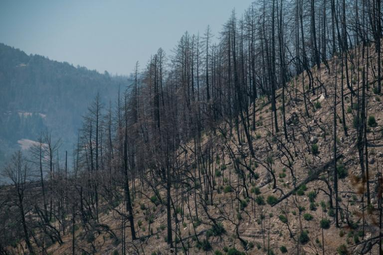 A scorched hillside from last year's Glass Fire is seen near Angwin, California (AFP/Nick Otto)