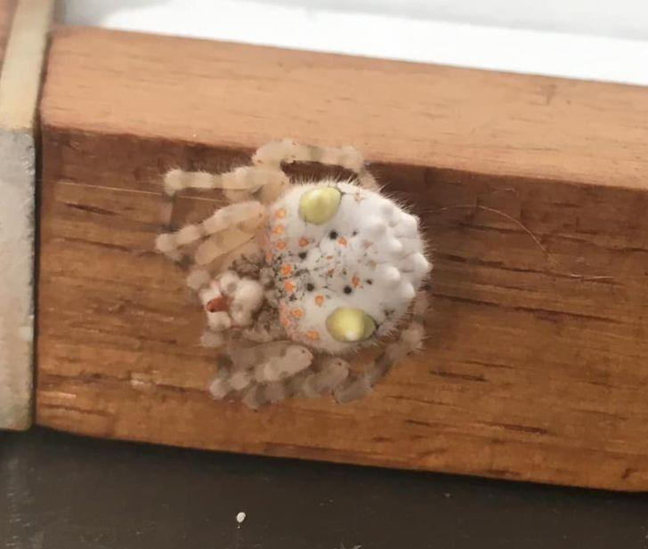 One person said the spider looks like a piece of sushi. Source: Facebook/ William Williamson