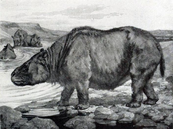 """<span class=""""caption"""">Megaherbivores like the toxodon were the avocado's best friend.</span> <span class=""""attribution""""><a class=""""link rapid-noclick-resp"""" href=""""https://upload.wikimedia.org/wikipedia/commons/7/71/Toxodon_platensis.jpg"""" rel=""""nofollow noopener"""" target=""""_blank"""" data-ylk=""""slk:Robert Bruce Horsfall/Wikimedia Commons"""">Robert Bruce Horsfall/Wikimedia Commons</a></span>"""
