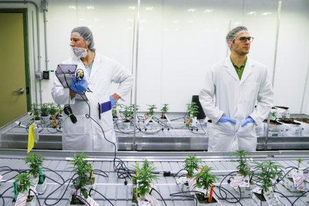 Students Michal Marcinkiewicz and Carson Otto measure the light in the marijuana lab at the new Commercial Cannabis Production Program at Niagara College in Niagara-On-The-Lake, Ontario, Canada, October 9, 2018. REUTERS/Carlos Osorio