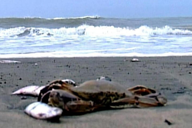 Plastic Pollution Kills More than Half a Million Hermit Crabs in Two Remote Islands