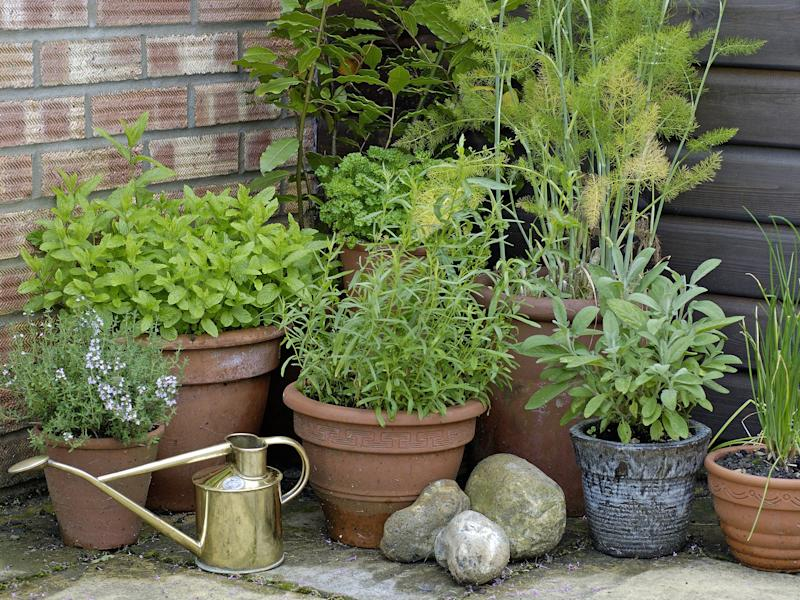 Pot plants have the ability transform a patio into a welcoming and friendly space: Rex