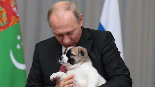 Photographs of Vladimir Putin cuddling and kissing his cute new puppy sent internet users into overdrive.