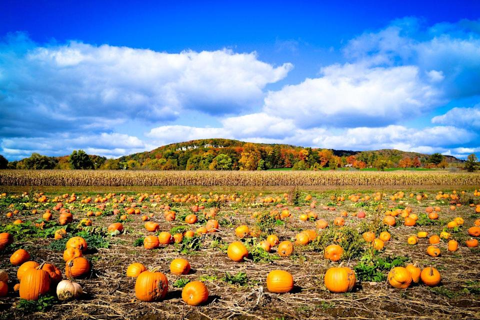 """<p><a href=""""https://www.countryliving.com/diy-crafts/g279/pumpkin-carving-ideas/"""" rel=""""nofollow noopener"""" target=""""_blank"""" data-ylk=""""slk:Pumpkins"""" class=""""link rapid-noclick-resp"""">Pumpkins</a>, colorful leaves in the distance, and a beautiful blue sky? Nope, a more perfect fall day doesn't exist. </p>"""